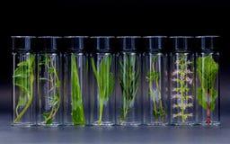 La bottiglia di olio essenziale con il basilico santo dell'erba fiorisce, rosmarini, o Fotografie Stock Libere da Diritti