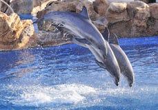 La bottiglia ha cappottato il delfino fotografia stock libera da diritti