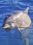 La bottiglia ha cappottato il delfino immagini stock libere da diritti