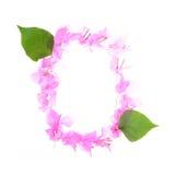 La bouganvillée fleurit l'alphabet d'isolement sur le fond blanc Photographie stock libre de droits