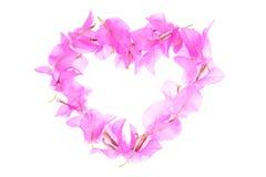 La bouganvillée fleurit la forme de coeur d'isolement sur le fond blanc Photographie stock libre de droits