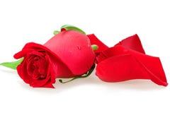 La bourgeon-fleur rouge de s'est levée Photos libres de droits