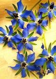 la bourrache fleurit au printemps Images stock
