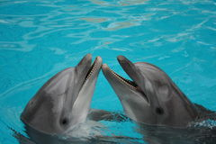 La bouteille a flairé des dauphins Image libre de droits