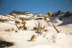 La branche a été mangée dans la perspective des montagnes Photos stock