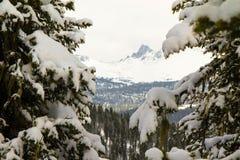 La branche a été mangée dans la perspective des montagnes Photographie stock libre de droits