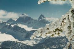La branche a été mangée dans la perspective des montagnes Photos libres de droits