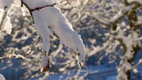 La branche d'arbre est couverte de neige pelucheuse clips vidéos