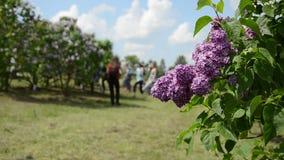 La branche d'arbre lilas de floraison et les personnes de touristes brouillées marchent Images libres de droits