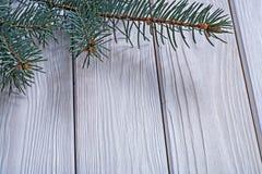La branche d'image de Copyspace du pinetree sur le vieux blanc a peint b en bois photos stock