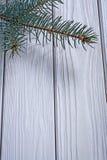 La branche d'image de Copyspace du pinetree sur le vieux blanc a peint b en bois photos libres de droits