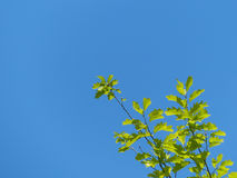 La branche de l'arbre Image stock