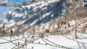 La branche de l'arbre accroche dans un paysage froid d'hiver photo libre de droits
