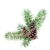 La branche de l'arbre de sapin avec des cônes sur le fond blanc, illustration d'aquarelle illustration de vecteur