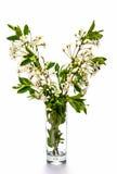 La branche des cerises Image stock