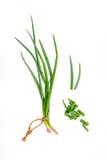 La branche des oignons frais de ressort et des oignons de ressort coupe pour la saison Image stock