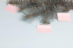 La branche du sapin bleu se trouve sur un fond texturisé vert clair Tout près sont collés trois autocollants de papier Image libre de droits