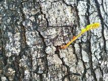 La branche est buisson latéral image libre de droits