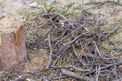 La branche et ouvrent une session l'herbe Image libre de droits