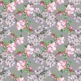 La branche fleurit Apple et la cerise Modèle sans couture d'aquarelle d'ouvrage sur Gray Background Images libres de droits