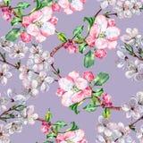 La branche fleurit Apple et la cerise Modèle sans couture d'aquarelle d'ouvrage sur un fond bleu Images libres de droits