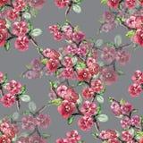 La branche fleurit Sakura Modèle sans couture d'aquarelle d'ouvrage sur Gray Background Images stock
