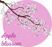 La branche réaliste de pommier avec la floraison fleurit l'illustration Photos libres de droits