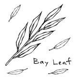 La branche sèche de congé de Green Bay Brindille avec des lames Fond avec l'herbe aromatique Ingrédient à cuire frais Viande, sou Illustration de Vecteur