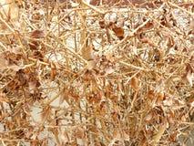 la branche sèche et sèchent des feuilles Photos stock