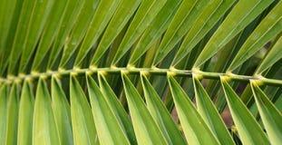 La branche verte avec beaucoup part Photographie stock