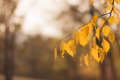 La brindille douce avec le jaune part dans la lumière du soleil de soirée photo stock