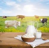 La brocca di latte e la ricotta lanciano sopra il prato soleggiato delle mucche Fotografia Stock