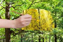 La brocha pinta las hojas amarillas en bosque verde Imagen de archivo libre de regalías