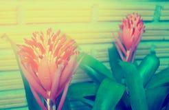 La bromelia planta la flor Imagen de archivo libre de regalías