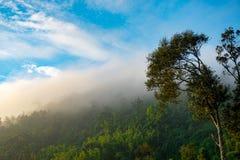 La brume Photographie stock libre de droits