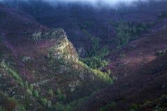 La bruyère pourpre a couvert des gorges et des forêts vertes Photographie stock libre de droits