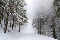 La bufera di neve in foresta immagini stock