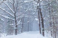 La bufera di neve nella foresta o nel parco di inverno con la neve di caduta immagini stock