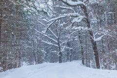 La bufera di neve nella foresta o nel parco di inverno con la neve di caduta fotografie stock libere da diritti