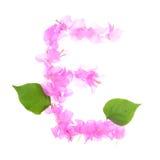 La buganvilla florece alfabeto aislada en el fondo blanco Imagen de archivo