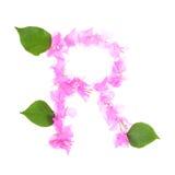 La buganvilla florece alfabeto aislada en el fondo blanco Fotografía de archivo