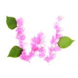 La buganvilla florece alfabeto aislada en el fondo blanco Imagen de archivo libre de regalías