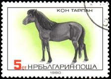 LA BULGARIA - CIRCA 1980: un bollo, stampato in Bulgaria, mostra un cavallo di Tarpan illustrazione di stock