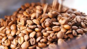 La cámara de la cámara lenta del primer muestra los granos de café almacen de metraje de vídeo