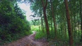 La cámara del abejón vuela cerca a lo largo de la trayectoria entre bosque tropical