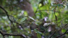 La cámara lenta de la pequeña mariposa blanca que lo agita se va volando en el bosque salvaje Taiwán almacen de metraje de vídeo