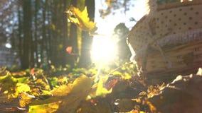 La cámara lenta estupenda tiró de las hojas de otoño que caían contra cesta brillante del sol y de la comida campestre almacen de video
