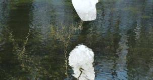 La cámara se mueve de abajo hacia arriba y primero y después quita la reflexión un pedazo de nieve en la rama que derrite y almacen de video