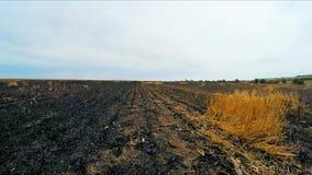 La cámara se mueve en el campo quemado almacen de video