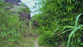 La cámara se mueve a lo largo de camino estrecho entre bosque tropical